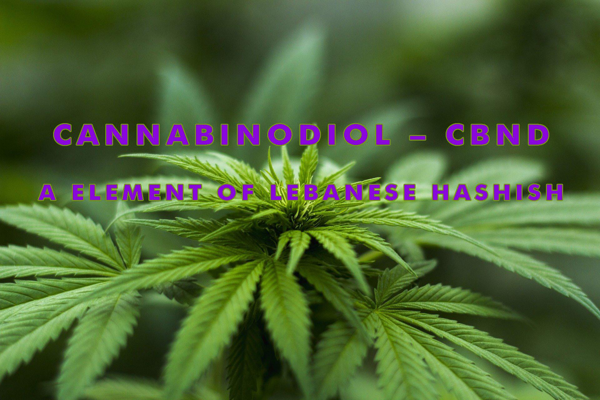 cannabinodiol cbnd a element of hashish elev8 education